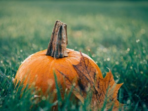 pumpkin-1030817_1280
